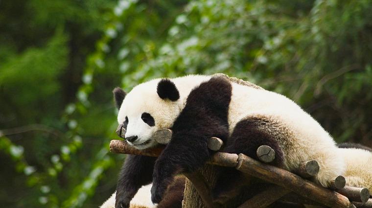 惱人黑眼圈 打擊過敏拒當熊貓眼